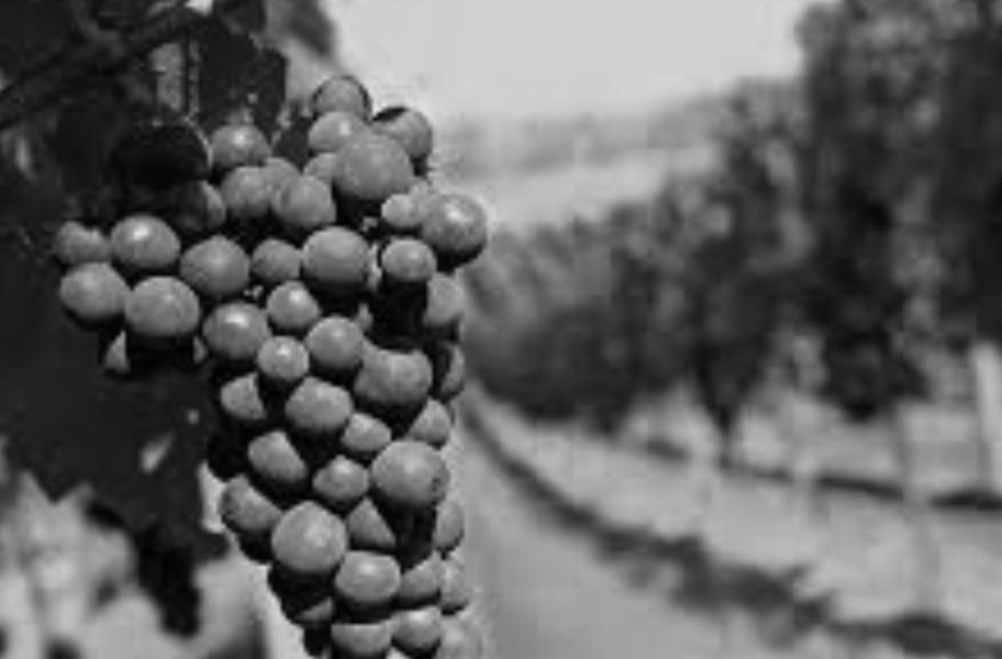bodega love vinedos sostenibles