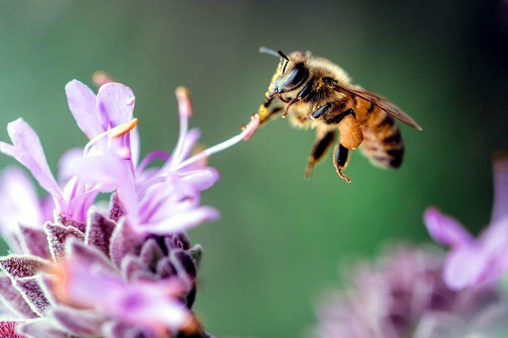 bodega love biodiversidad